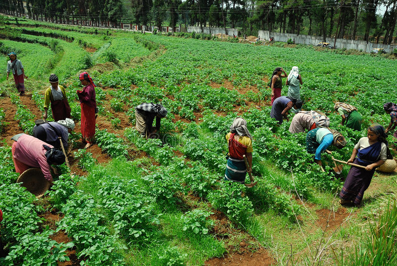 农业印地安人 免版税库存照片