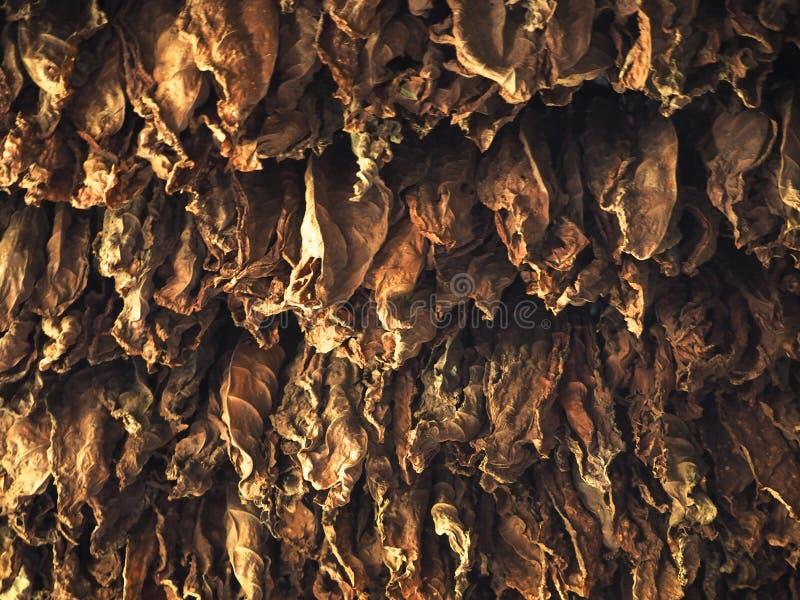 Download 农业古巴 库存照片. 图片 包括有 吠声, 西部, 工厂, 热带, 古巴人, 香烟, 古巴, 著名, 问题的 - 72356024