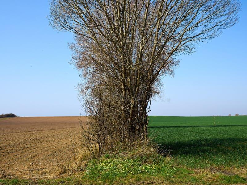 农业在种植和绿色领域前的背景土壤 库存图片