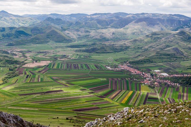 农业在罗马尼亚 库存图片