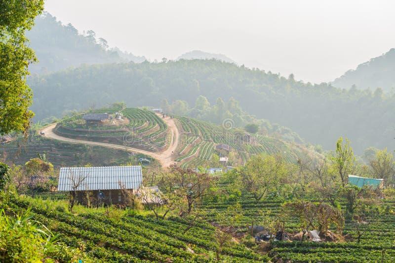 农业在领域的草莓蓝莓 图库摄影