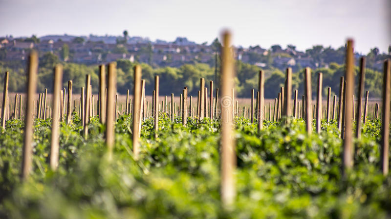 农业在Fallbrook,南加利福尼亚 免版税库存图片