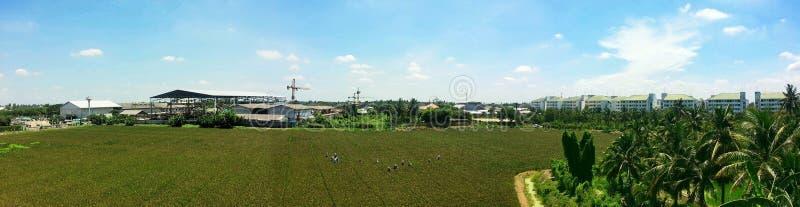 农业学家在泰国 库存图片