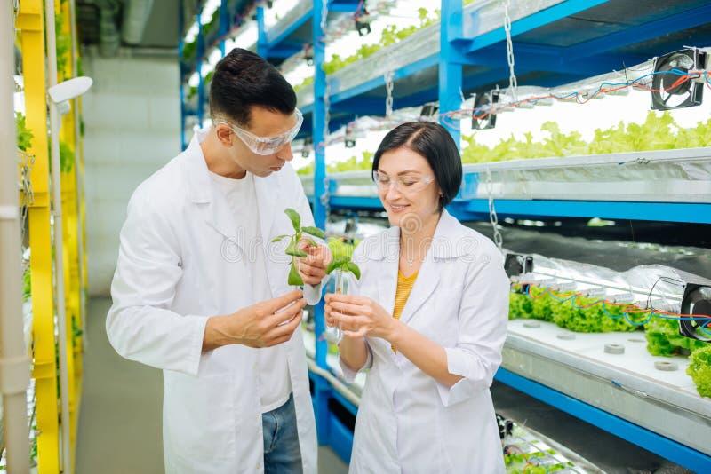 农业学家微笑的谈话与同事和种植绿色 图库摄影