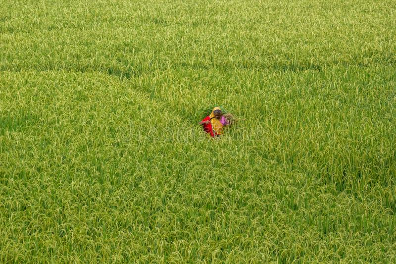 农业工作者 免版税库存照片