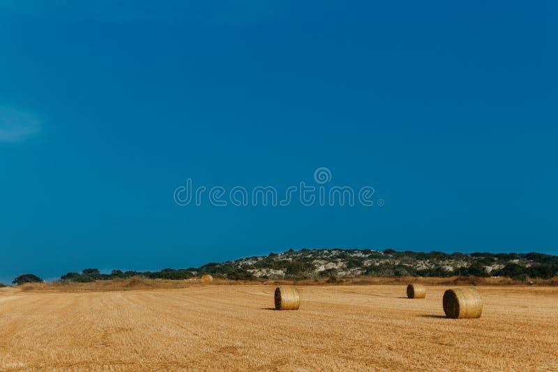 农业干草堆领域 免版税库存照片