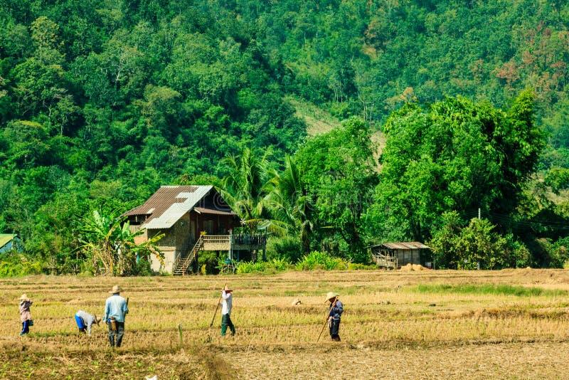 农业有机领域风景  免版税库存照片