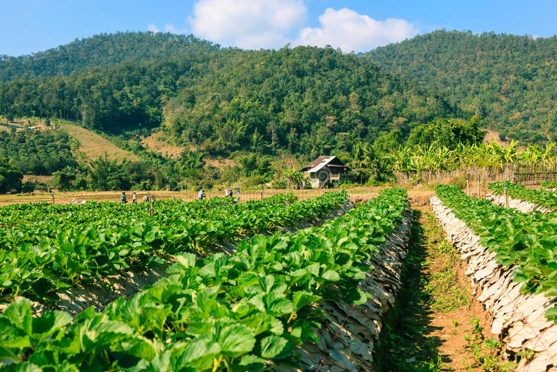 农业有机领域风景  免版税库存图片