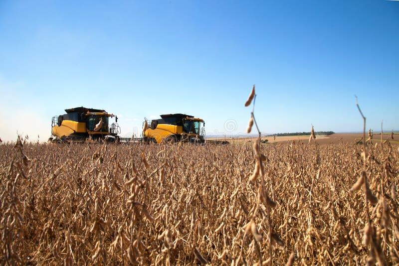 农业机器收割大豆领域 库存照片