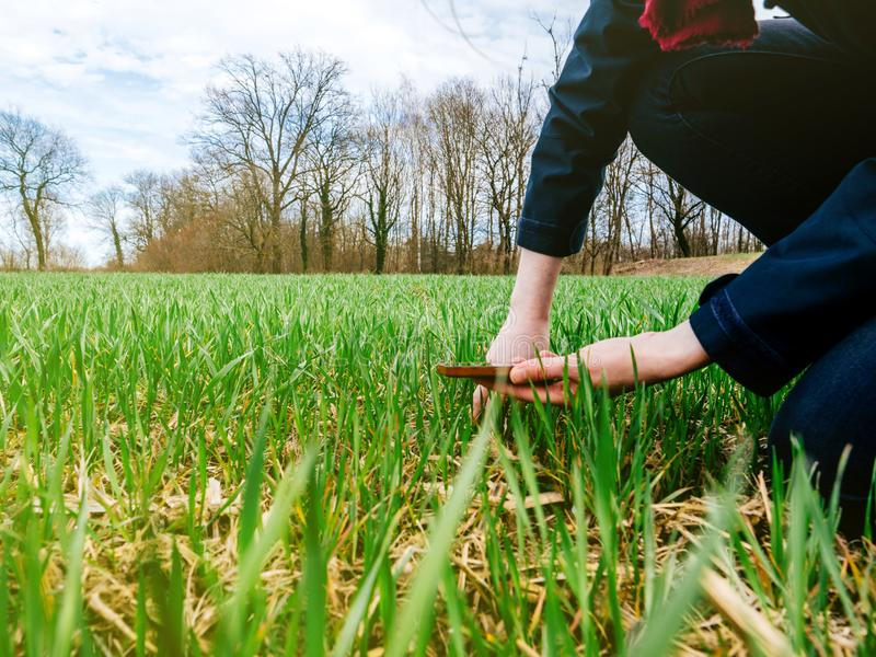 农业检查收获的妇女生物学家 免版税库存照片