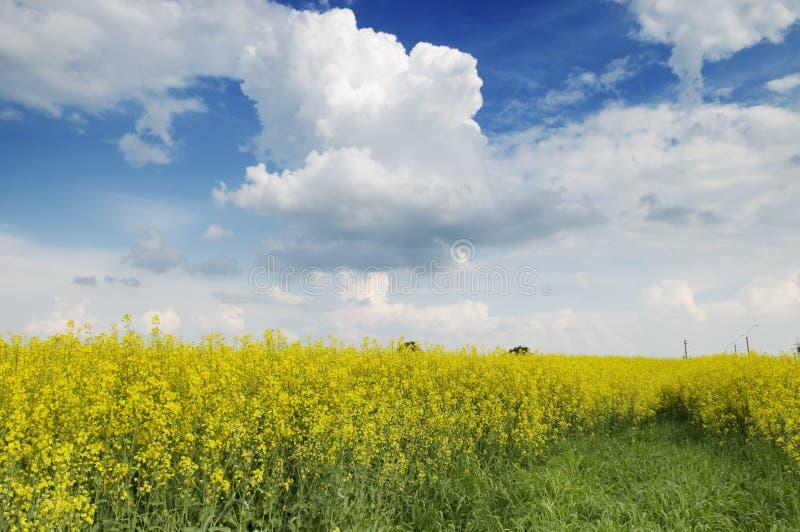 农业横向本质夏天 库存图片