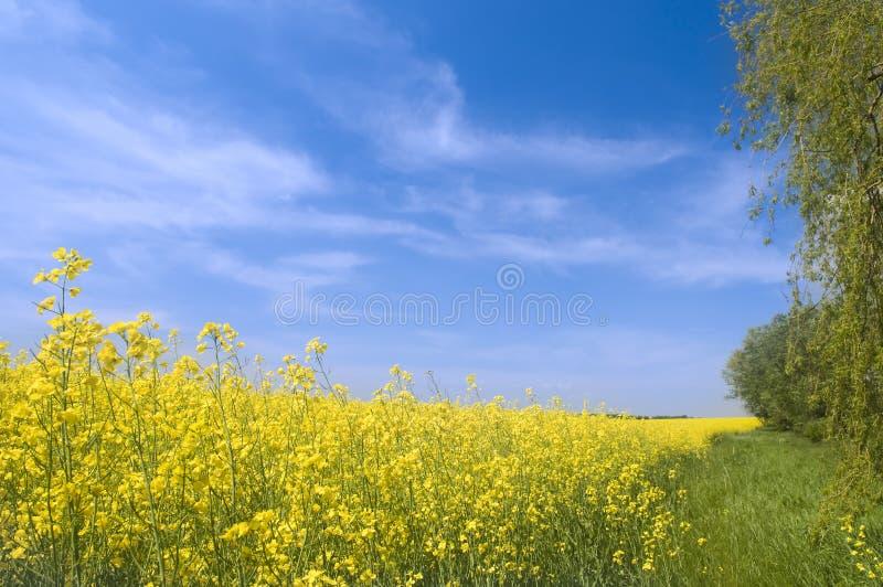 农业横向本质夏天 库存照片