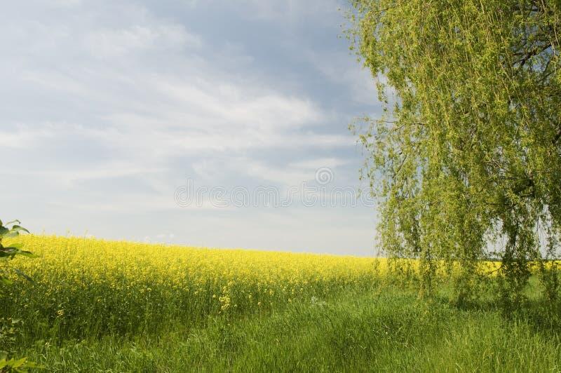 农业横向本质夏天 免版税库存照片