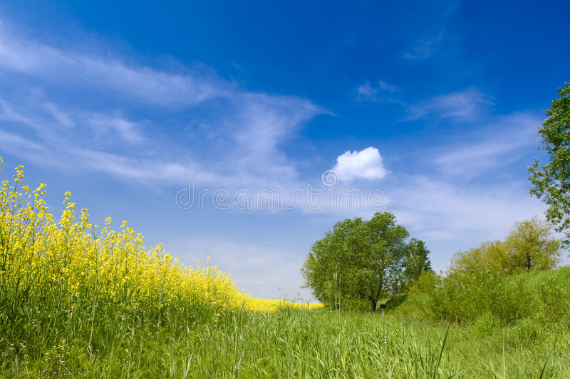 农业横向本质夏天 免版税库存图片