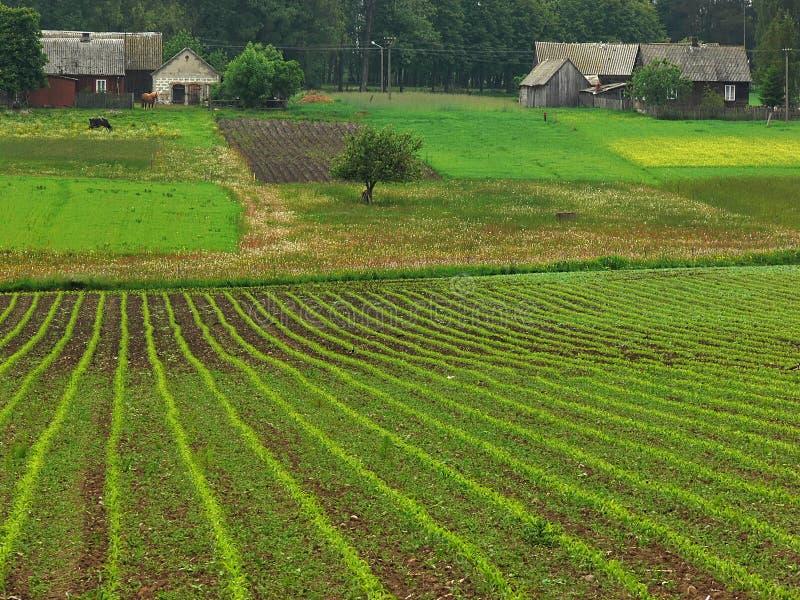农业横向 库存照片