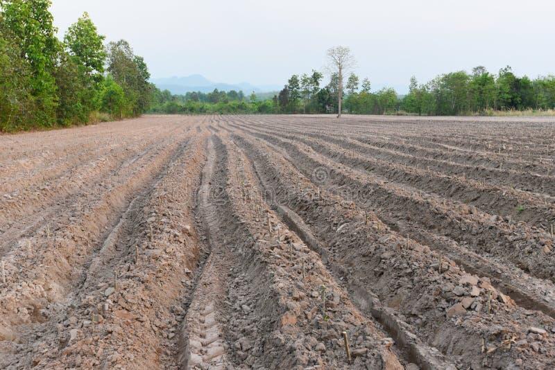 农业犁准备土壤-开始种植木薯领域农田 库存照片