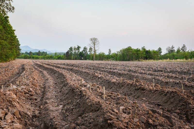农业犁土壤为开始种植木薯领域做准备-农田 免版税库存照片