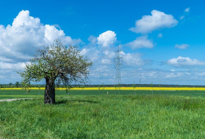农业生产 麦子耕种 在森林旁边的领域 ( 库存图片