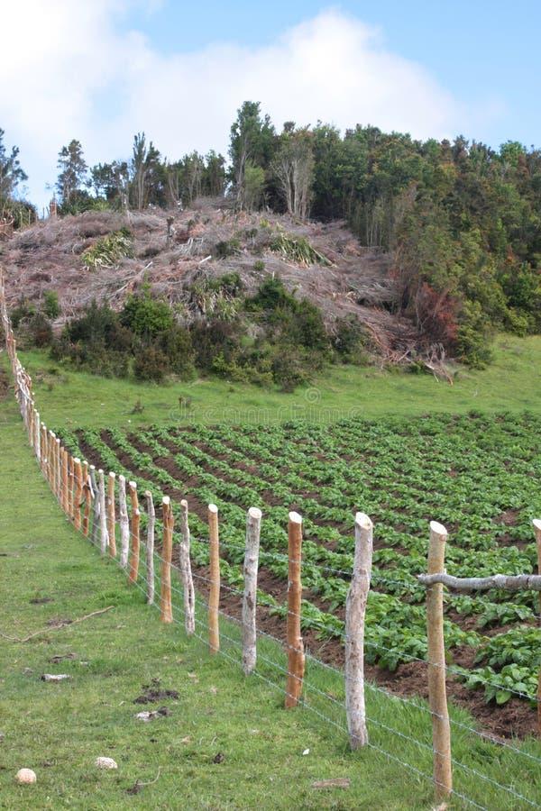 农业砍伐森林 库存图片