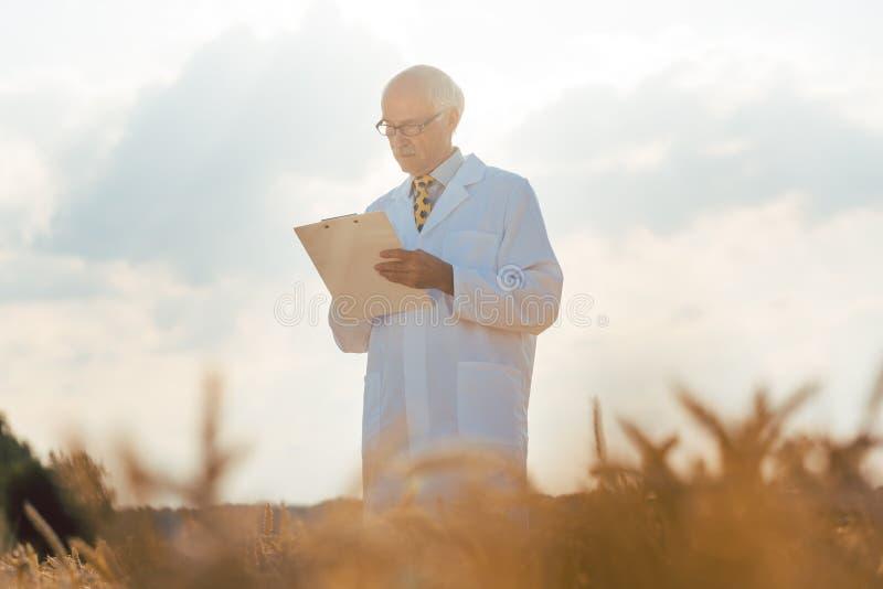 农业科学家跟踪的数据为五谷新的品种  库存图片
