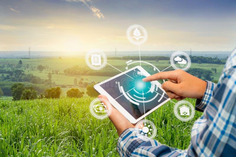 农业管理,手有聪明的技术概念的藏品智能手机 库存照片