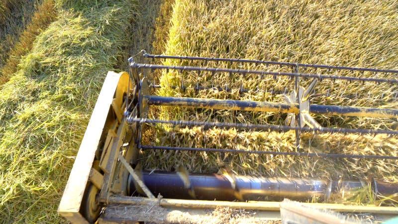 农业组合切口和收获麦子 免版税库存图片