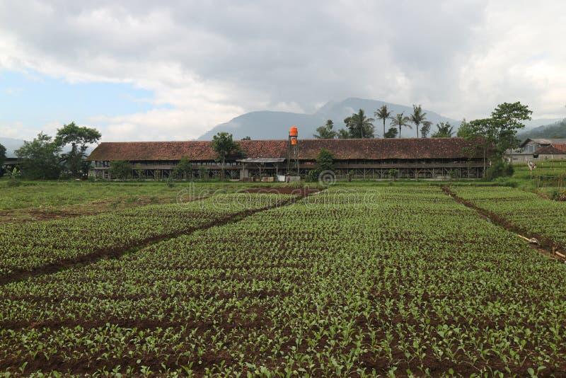 农业菜领域 有机农场 免版税库存照片