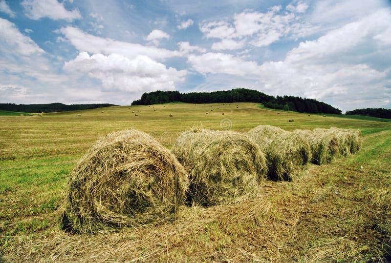 农业覆盖域横向天空 免版税库存图片