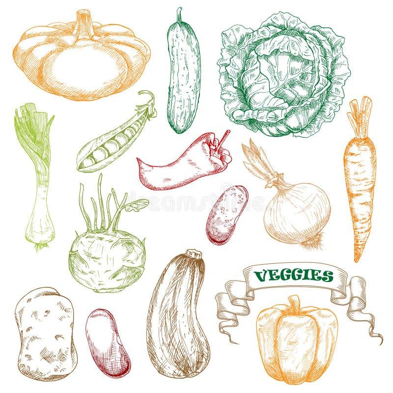 农业设计的色的速写的菜 库存例证