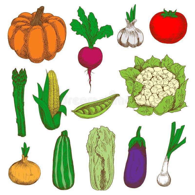 农业设计的色的速写的菜 皇族释放例证