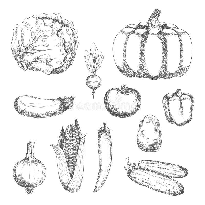 农业设计的速写的新鲜蔬菜 皇族释放例证