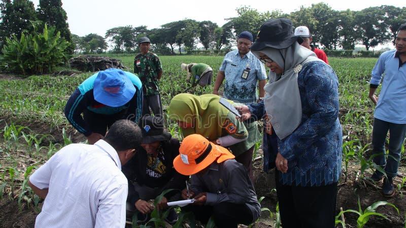 农业部玉米园害虫管理社会化中的官员 免版税库存照片