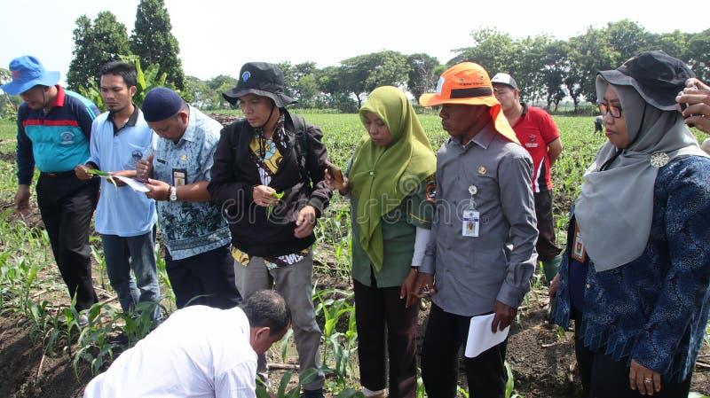 农业部玉米园害虫管理社会化中的官员 免版税库存图片