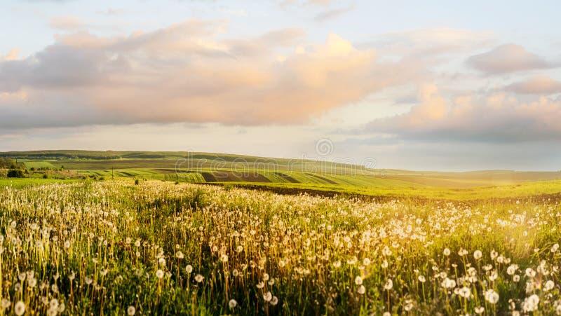 农业领域和有启发性蒲公英风景  库存照片