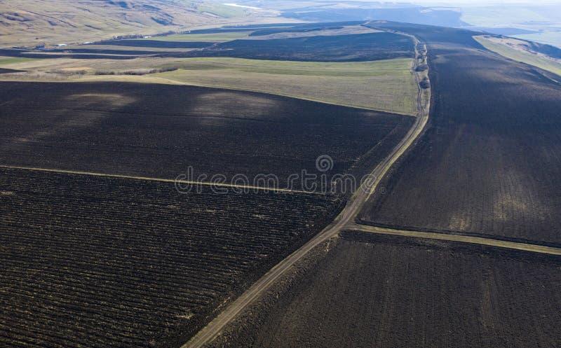 农业领域寄生虫视图 库存图片