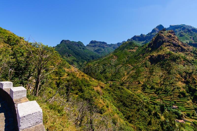 农业领域的全景在葡萄牙 图库摄影