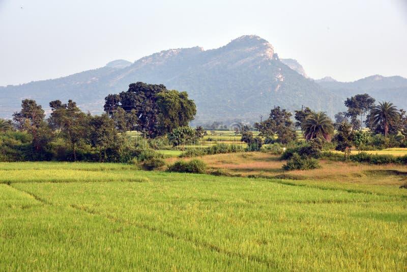 农业风景在印度 免版税库存照片