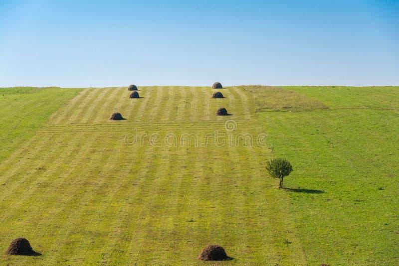 农业风景,行的干草堆,唯一树,蓝天 图库摄影