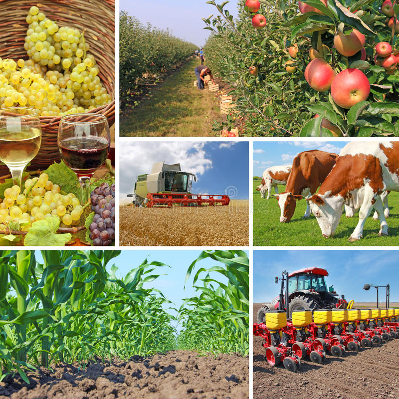 农业-拼贴画 免版税库存图片