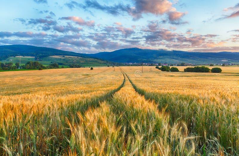 农业-麦田 免版税库存图片