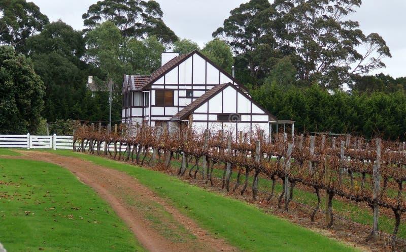 农业vinyard 免版税库存图片