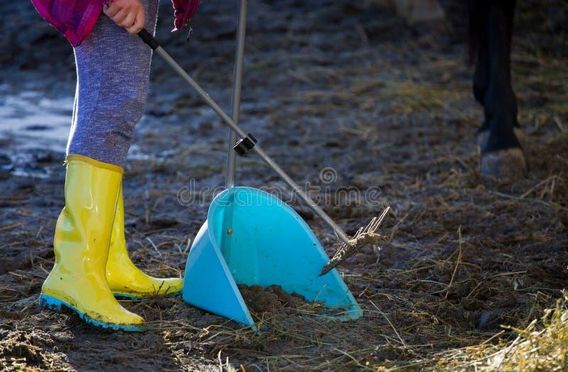 农厂工人清洁马排汇物 库存图片