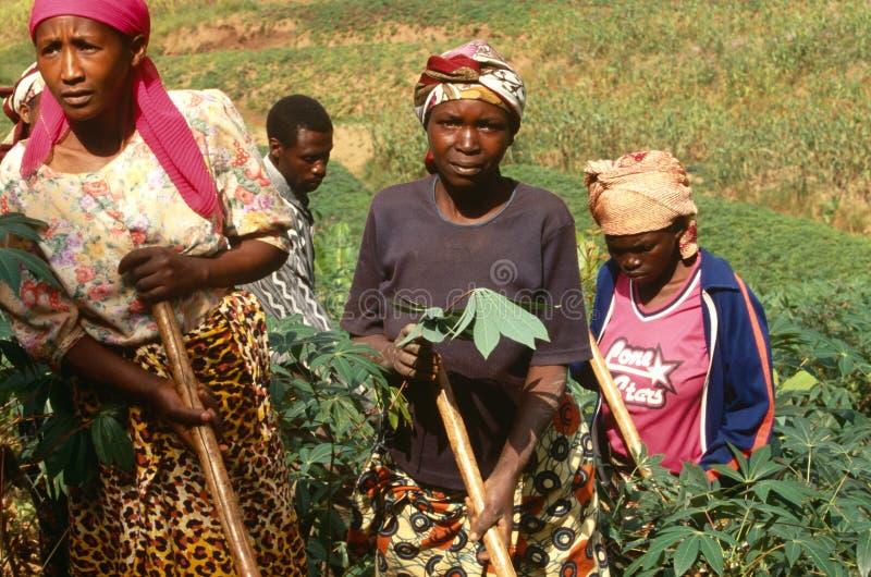 农厂工人,乌干达 库存图片