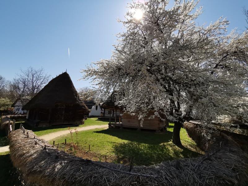 农厂房子内在庭院-春天树开了花 免版税库存照片