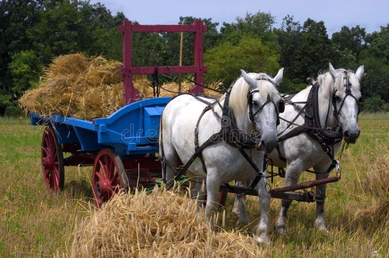 农厂拉小组无盖货车的干草马 免版税库存照片
