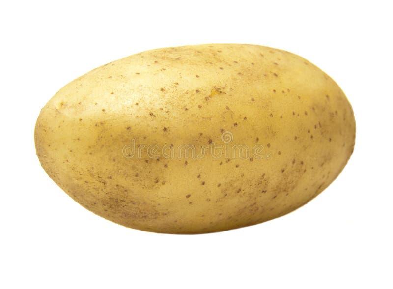 农厂新鲜的土豆 免版税图库摄影