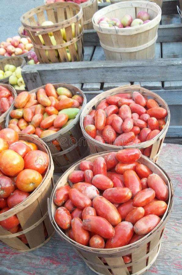 农厂新鲜的罗马蕃茄在纽约 图库摄影