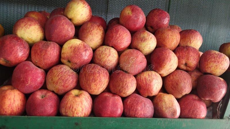 农厂新鲜的苹果群在机架安排了 库存照片