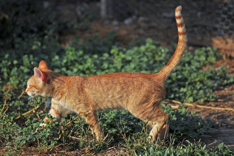 农厂猫 库存图片