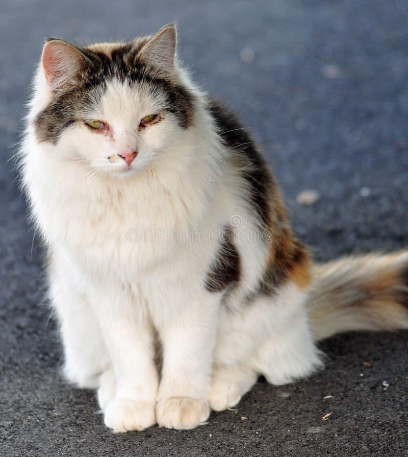 农厂猫 免版税库存照片